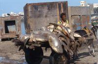 Yemen_1993_040_04-03-2016