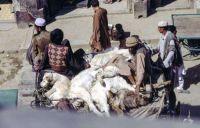 Pakistan_1991_0116