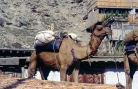 Pakistan_1991_0137